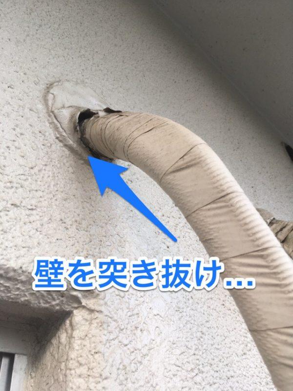 ゴキブリの壁内への侵入経路