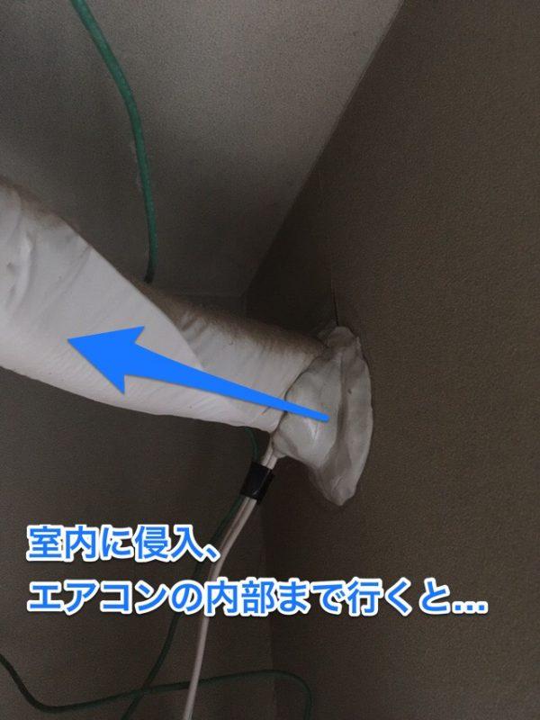 ゴキブリがエアコンの配管から室内へ侵入