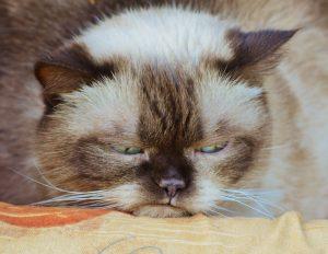 cat-1378203_640